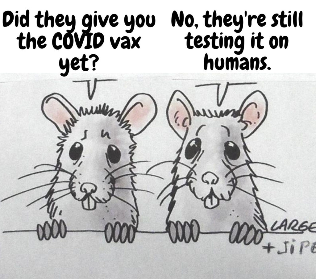 This image has an empty alt attribute; its file name is rats-vaccine-test-1.jpg